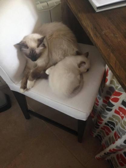 Lipton et sa maman