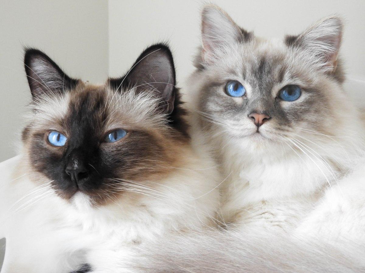 Mes 5 conseils pour accueillir un deuxième chat