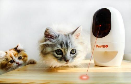 pawbo-interactive-pet-camera-review